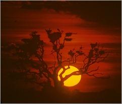 Image16 doñana alcornoque y puesta de sol